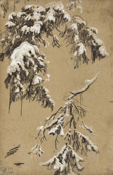 Шишкин И. И. Ветки под снегом. Этюд к картине «На севере диком...». 1890
