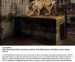 Тарин Саймон. Белый тигр (Кенни), внутривидовая селекция, Заповедник и Фонд Тарпентайн Крик, Юрика Спрингз, Арканзас. 2006-2007 © Taryn Simon. Courtesy Gagosian Gallery